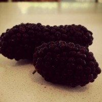 Mulberries bring back memories