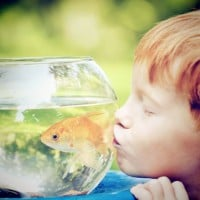 What's the cheapest pet for your kids?