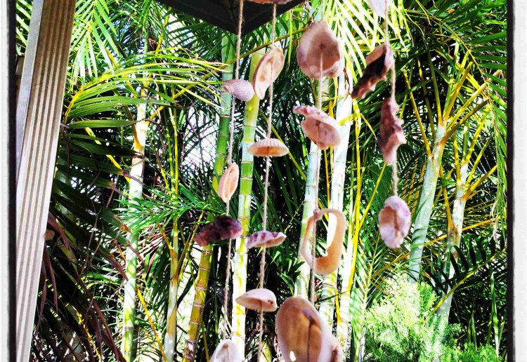 Home Made Shell Wind Chimes