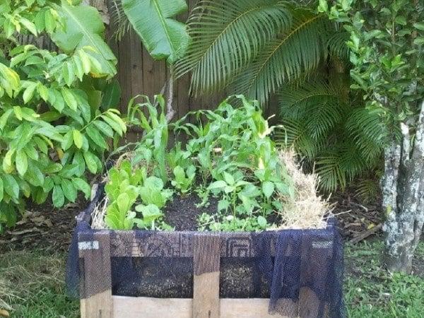 Crate garden