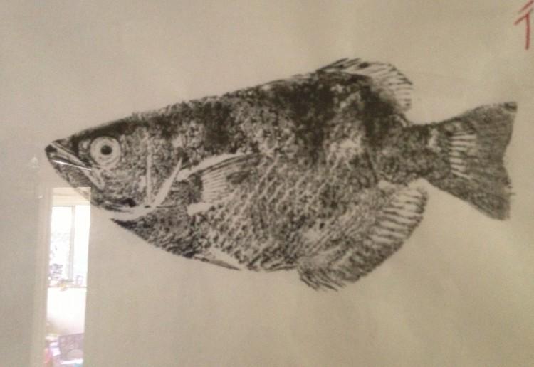 Fish rolling Gyotaku