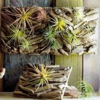 Living driftwood art