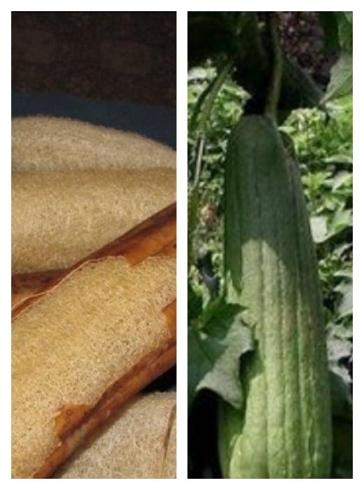 Organic Loofahs