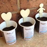 Seedlings in a coffee cup
