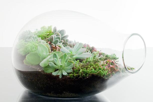 03=DIY terranium with succulents via andchristina.com