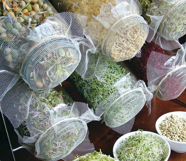 05-Sprout farm in mason jars available online at Zanui via optimyz.com