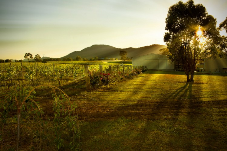 WIN 1 of 3 exclusive A Little bit of Italy wine and produce packages