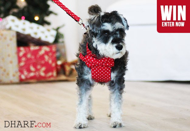 WIN 1 of 5 Dharf Dog Harnesses!