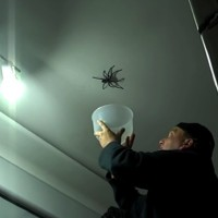 What happens when Dad tries to catch a spider?