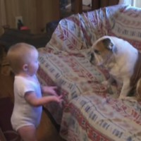 When dogs and babies play together