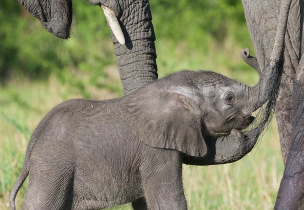 Baby_elephant_Inside