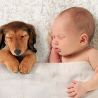 5 reasons your children need a dog