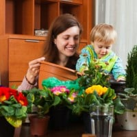 5 plants that make air healthier for families at home