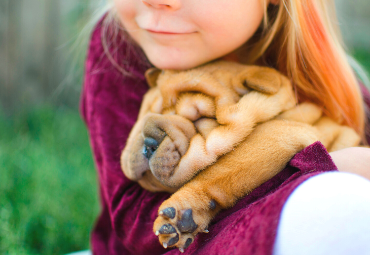 Five Ways To Keep Your Dog Healthy And Happy This Winter