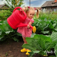 How to start a vegetable patch