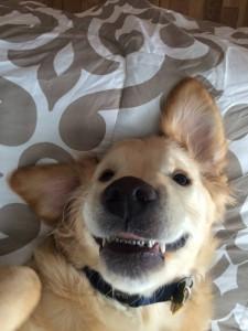 dog braces