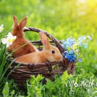 How to sew a felt Easter bunny