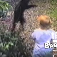 FUNNY VIDEO: Cats vs. Babies