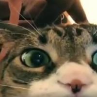 FUNNY VIDEO: Cat Interrupts Yoga Session