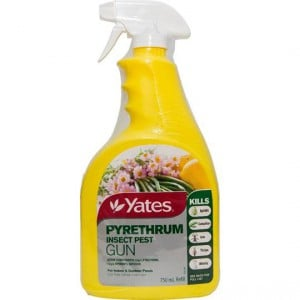 Yates Pyrethrum Insect Control Spray Bottle & Refill
