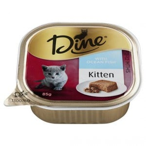 Dine Kitten Food With Steamed Ocean Fish