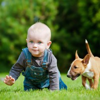 Video: Puppies loving babies