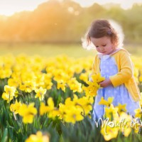 It's Daffodil DAY on Friday 26th August