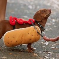 Video: Funniest Halloween costumes for pets!