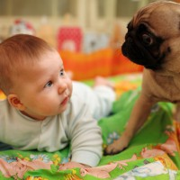 Video: Dog's funny reaction to new baby