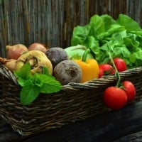 The Two Golden Rules of Nutrition