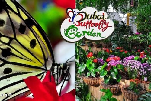 visit-dubai-feature_dubai-butterfly-garden