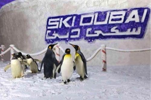 visit-dubai-feature_ski-dubai_penguins