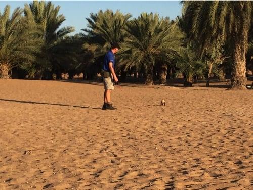 arabian-adventures-dubai_2_falcon-show-en-route-to-the-desert-camp
