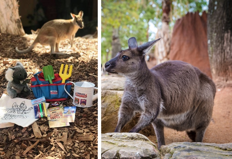 Win Tickets to Wild Life Sydney Zoo Plus A Sherlock Gnomes Bumper Prize Pack
