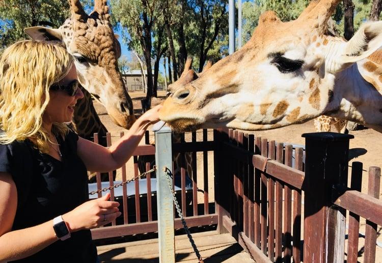 taronga-dubbo-giraffe