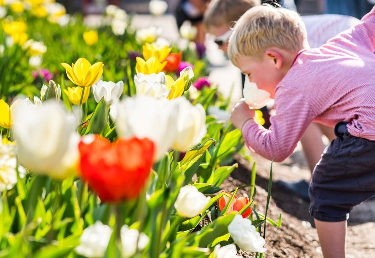Win A Family Getaway To Canberra For The Famous Flower Festival Floriade