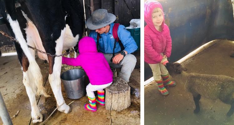 mowbray-farm-feeding