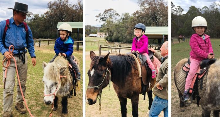 mowbray-farm-horse