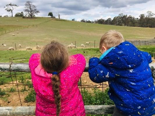 mowbray-farm-view