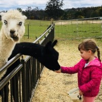 Our Pick Of Family Farmstays Is Mowbray Park