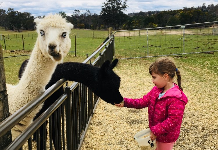 mummaJo reviewed Our Pick Of Family Farmstays Is Mowbray Park
