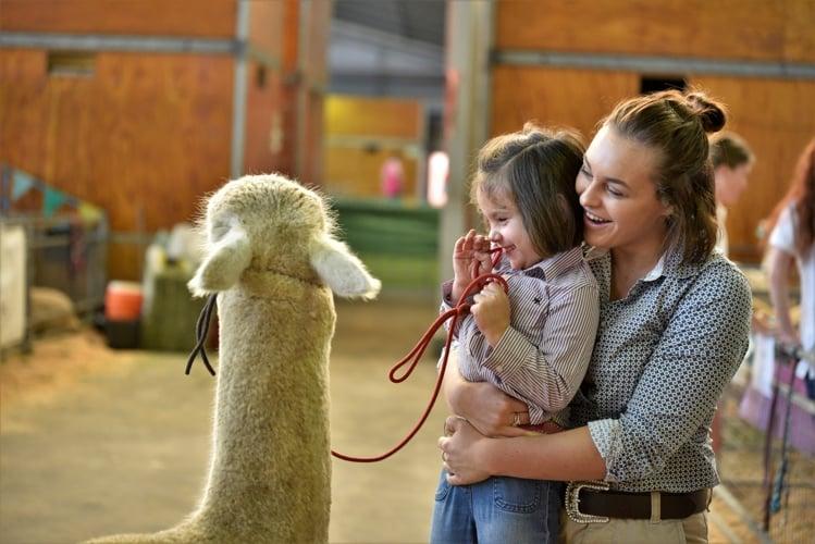 easter-show-llama