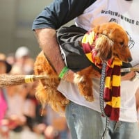 A Harry Potter Fun Run Is Coming To A City Near You!
