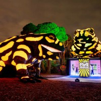Melbourne Zoo Lights Up For The School Holidays