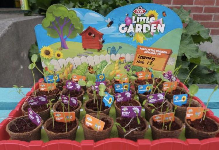 Little Garden campaign