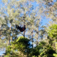 Soar Through The Air With A Family Zipline Tour At Illawarra Fly Treetop Adventures