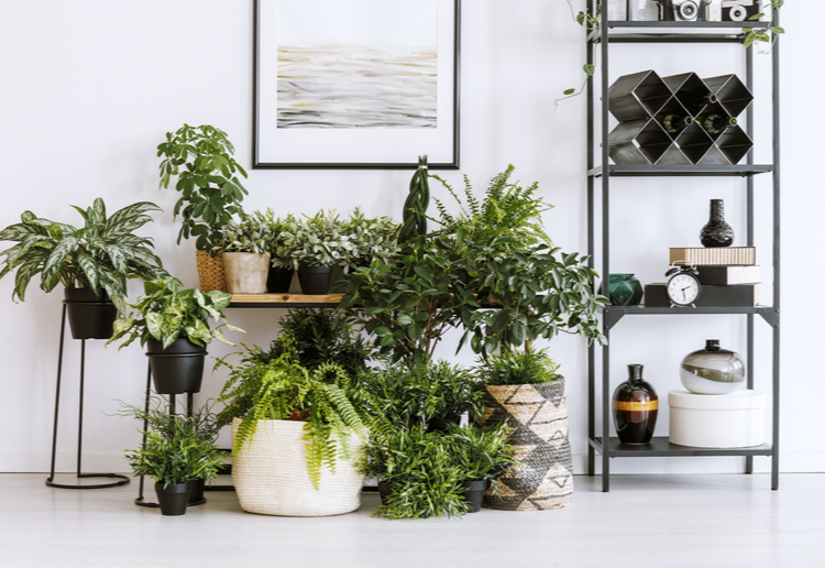 10 Beautiful Indoor Plants You NEED In Your Home