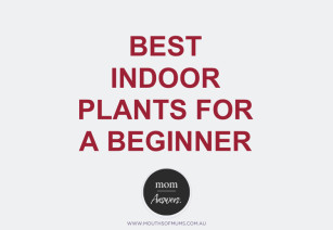 Help! Are There Any Indoor Plants I Can't Kill?