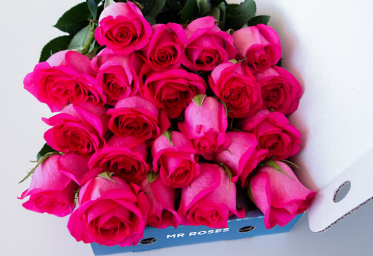 pink roses from Mr Roses