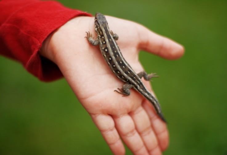low maintenance pets lizard